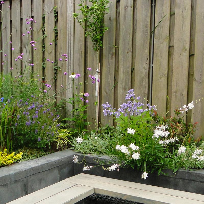 Multigroen hoveniers boomverzorging tuinontwerp for Tuin beplanten